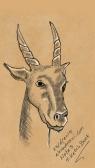 Sketch242112730