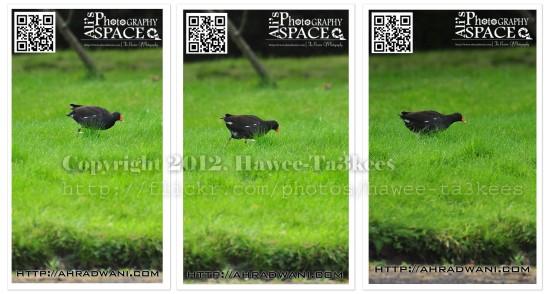 D90_20120925_8826DSC_1266 copy