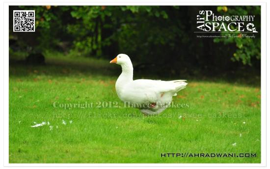 D90_20120924_8701DSC_1121 copy