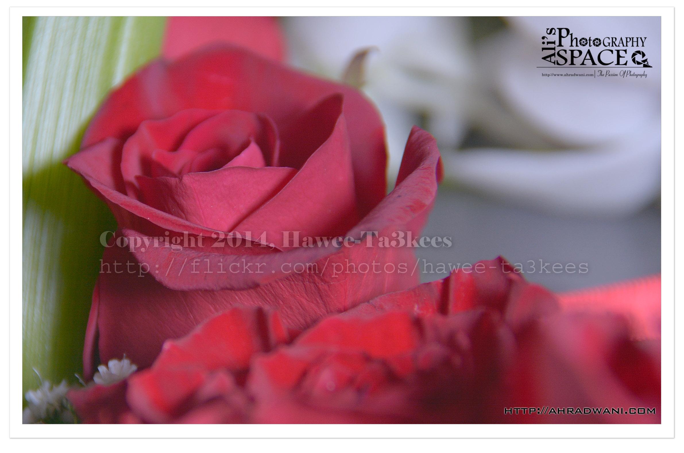 DSC_5454 copy