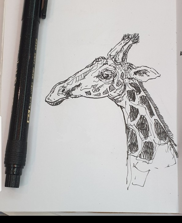 Ali radwani drawing giraffe sketch challenge 1hour1sketch pen pencil