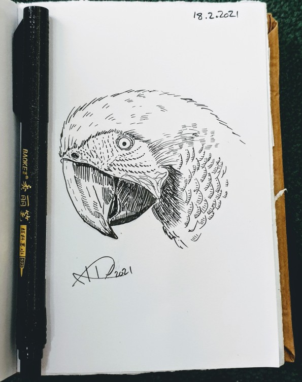 Ali radwani drawing sketch challenge 1hour1sketch pen pencil parrot