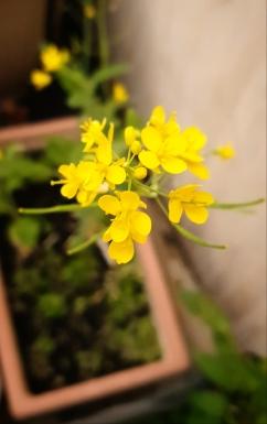 Ali radwani yellow flowers photo Photography