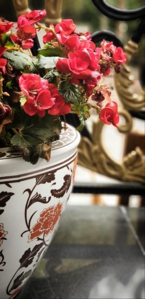 Ali radwani red flowers photo Photography