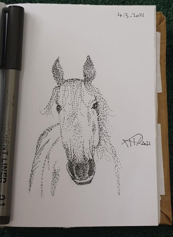 Ali radwani drawing sketch challenge 1hour1sketch horse pen pencil