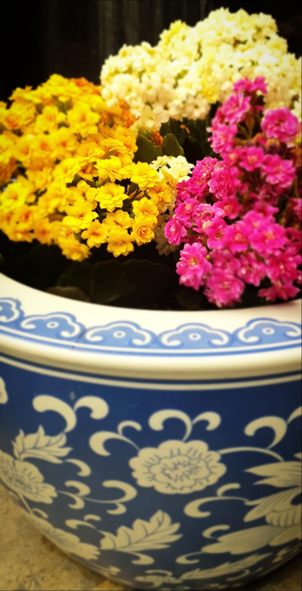 flowers photo ali doha qatar