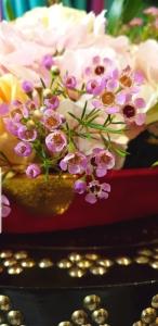 ali radwani doha qatar pink flowers photo galaxy note9