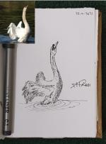 ali radwani draw sketch pen pencil swan lake