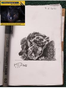 ali radwani sketch doha pen pencil sketchbook