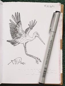 Ali radwani drawing sketch challenge pen pencil