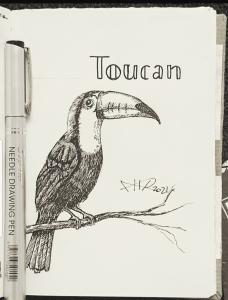 ali radwani sketch sketchbook bird